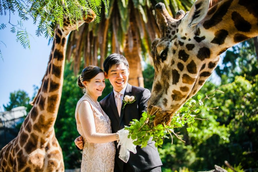 Kevin & Emily's Melbourne Zoo Wedding Photography