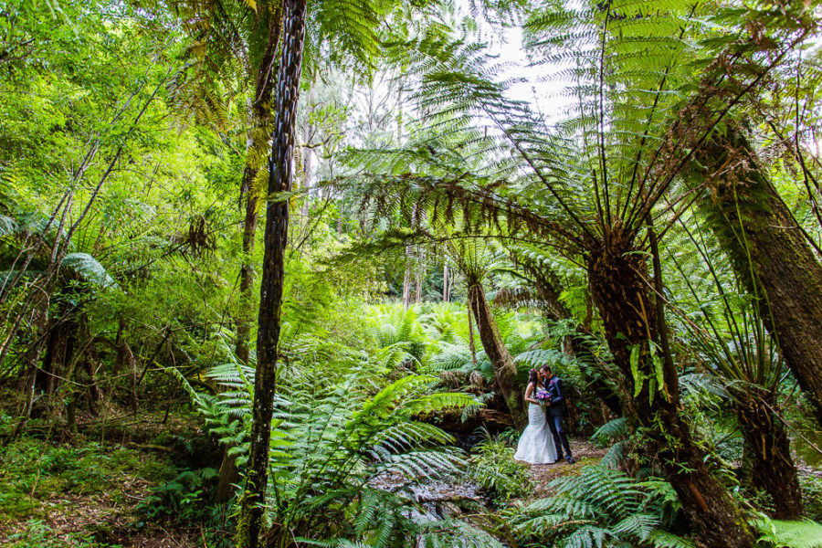 Mick & Thida's Wedding Photography | Lyrebird Falls